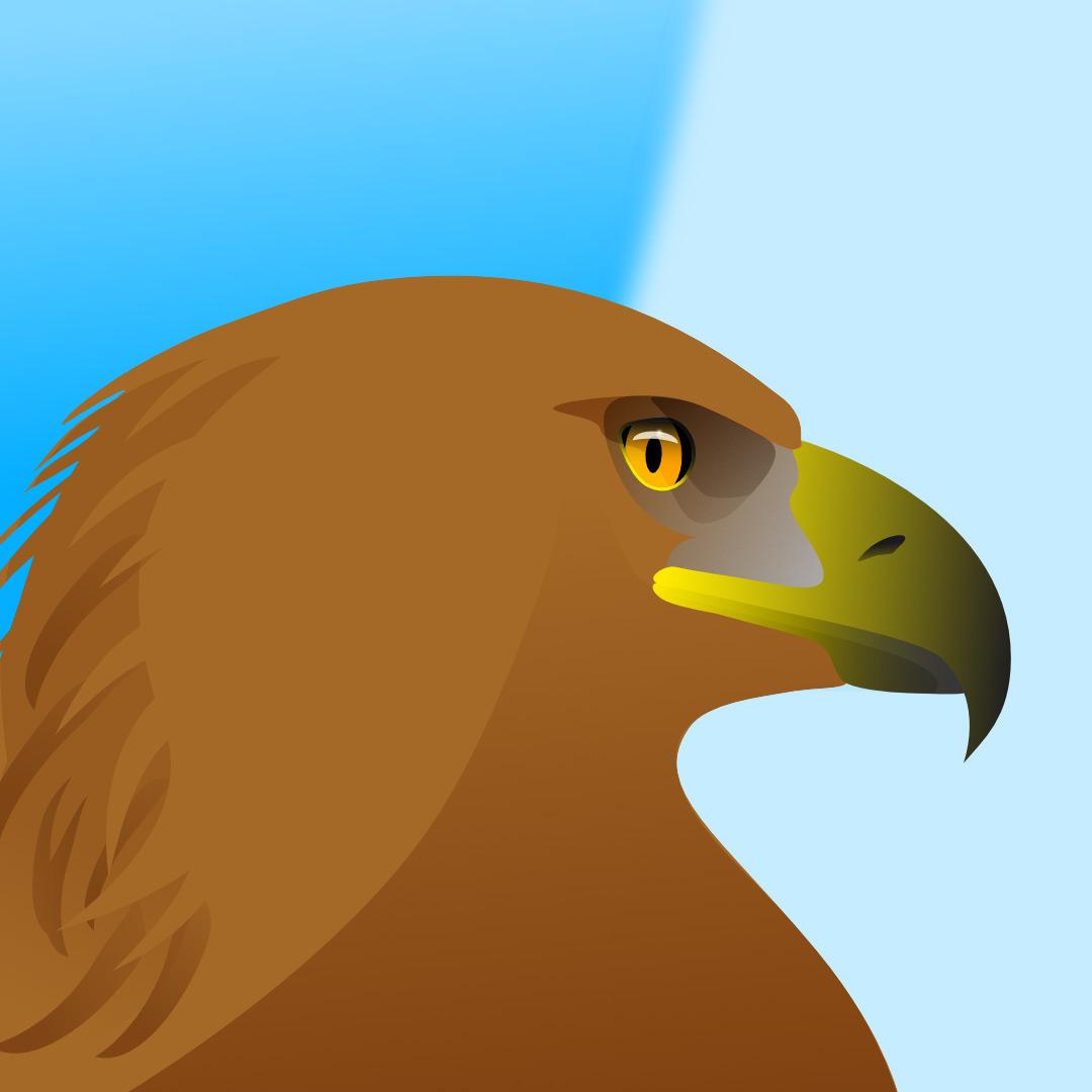 Steinadler_Aquila_chrysaetos_golden_eagle_illustration